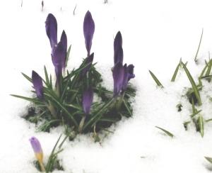 spring-winter
